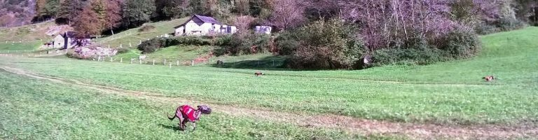 Autumn Coursing in Lostallo 2018